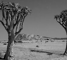 Sentinals of the Namib Desert iin black and white by Wild at Heart Namibia
