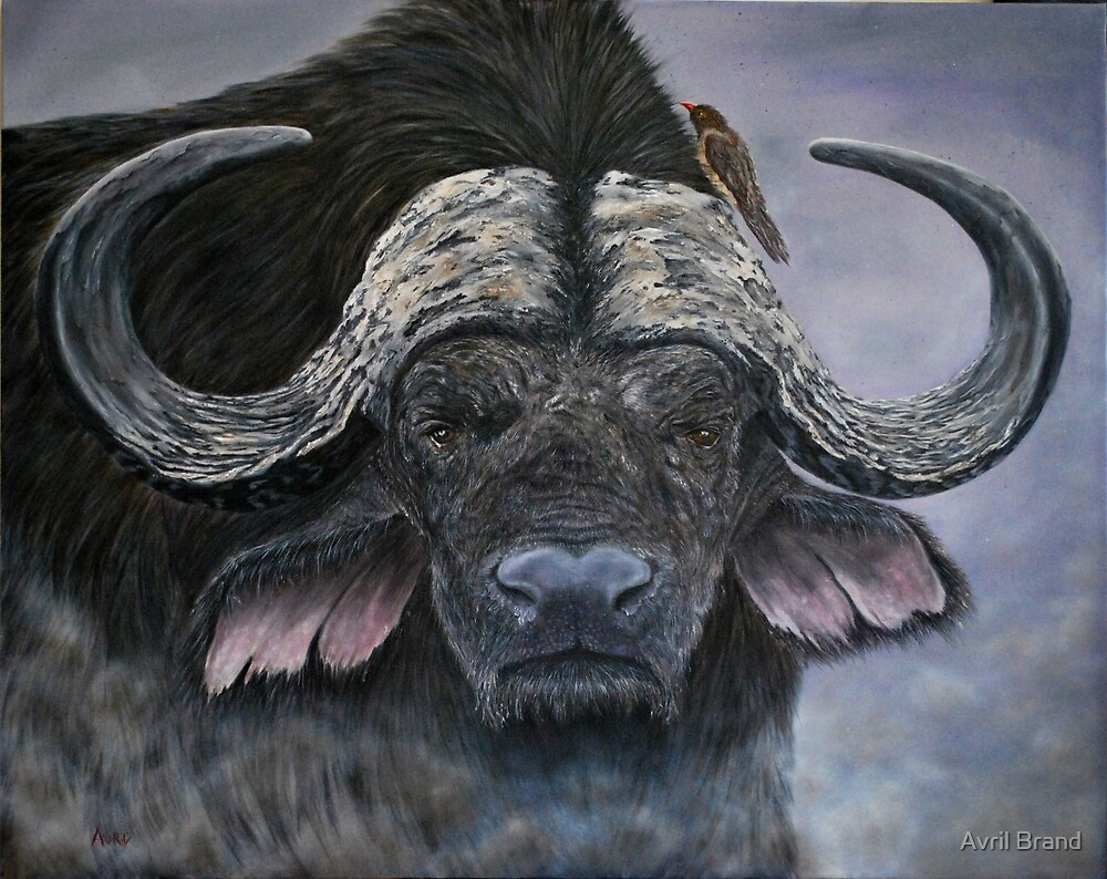 """Danger in the Dust"" - Cape Buffalo oil painting by Avril Brand"