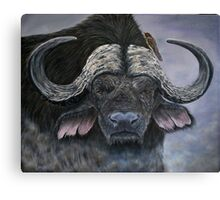 """Danger in the Dust"" - Cape Buffalo oil painting Canvas Print"