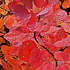 Red Autumn. by Bette Devine