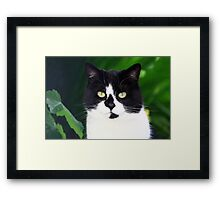 Black and white cat looking at camera Framed Print