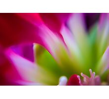 Vibrant Flower Fine Art & Macro Photography Photographic Print