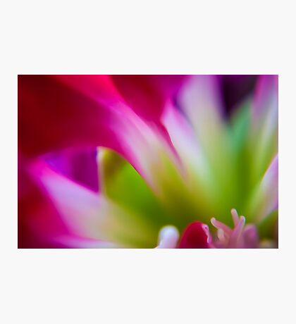 Vibrant Flower Fine Art & Macro Photography Photographic Print
