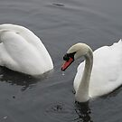 Swans by thejessis