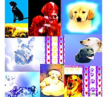 K9 Hearts and Paws  Photographic Print