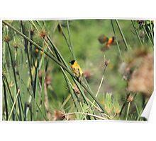 Little Yellow Bird Poster