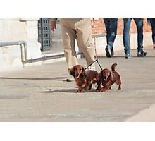 Dachshunds Twins Photographic Print