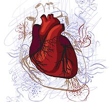 drawing of the heart, anatomical by OlgaBerlet