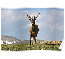 King of the Alpine Tundra Poster