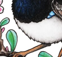 Superb Fairywren or Superb Blue Wren Sticker
