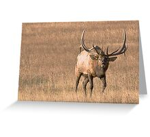 Bull Elk Bugling Greeting Card