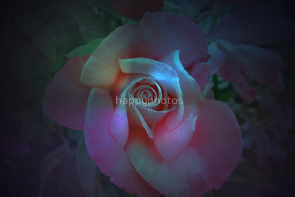 Enchanted rose by happyphotos