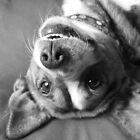 Dog days by GreyFeatherPhot