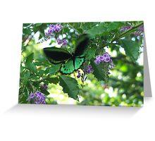 male birdwing  Greeting Card