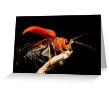 Orange Beetle Greeting Card