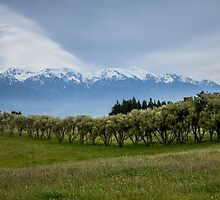 A view from Kaikoura peninsula by 29Breizh33