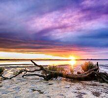 Serenity by Annette Blattman