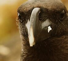 Mountain Raven by Robin Hayward