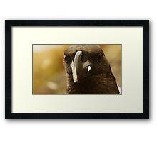 Mountain Raven Framed Print