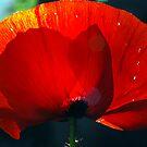 Poppy. by S Fisher