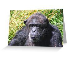 Chimp portrait...... Greeting Card