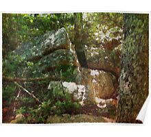 Lichens, Wood And Stone Poster