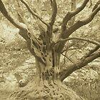 irish tree by pablitoblusher