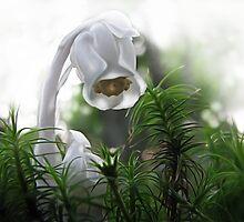 Ghost Flower by Danielle Davenport