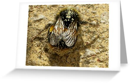 Bumble-Bee Wings by saleire