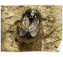 Bumble-Bee Wings Poster