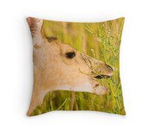 Mule Deer Munchies Throw Pillow