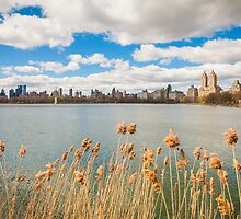 Central Park by Nelson Mineiro