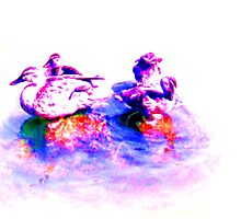 DUCKS IN A REFLECTING POOL by KEITH  R. WILLIAMS