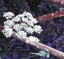 Cow Parsley by justlinda