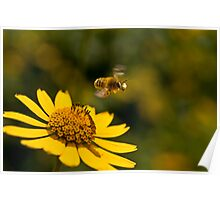 Bee Off Poster