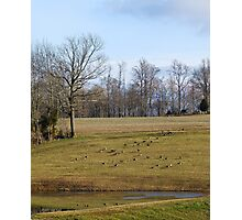 40 Geese Photographic Print