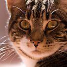 Alert Cat by dozzie