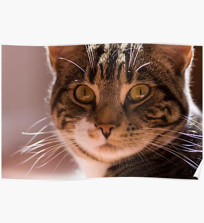Alert Cat Poster