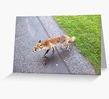 Wild Fox rare to see during daytime in London Greeting Card