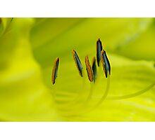 Yellow Elusion Photographic Print