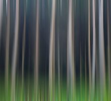Forest of Dreams by Nigel R Bell
