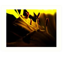 Lemon Lilly Touched by Light Art Print