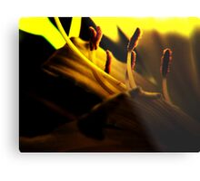 Lemon Lilly Touched by Light Metal Print