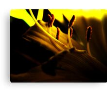 Lemon Lilly Touched by Light Canvas Print