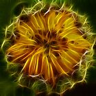 Bud abstract by Sue Purveur