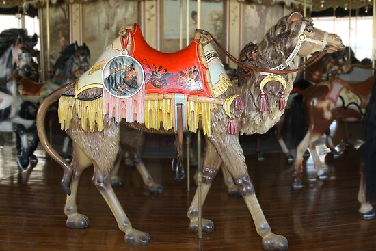 Mister Camel of PTC No. 6 by Patricia Montgomery