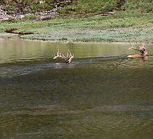 Swim! by Patricia Montgomery