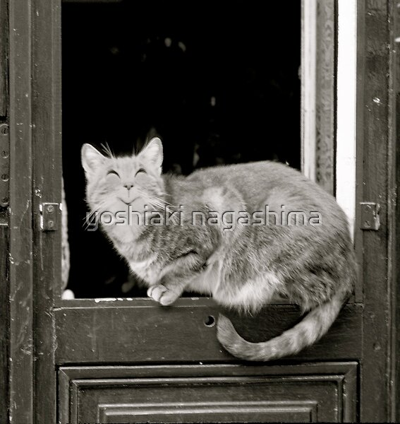 Rire Cat, Paris by yoshiaki nagashima