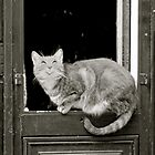 Rire Cat, Paris by yoshiaki nagashima