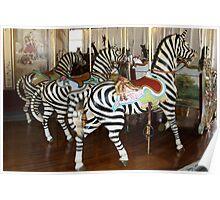 Trio of Zebras of PTC No. 6 Poster